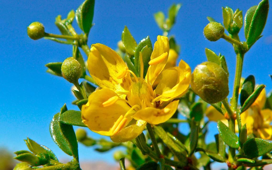 la próstata se puede curar con hierbas con limon